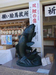 広島護国神社の鯉